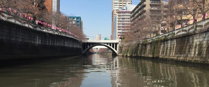 2016 お花見クルージング 目黒川